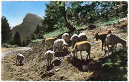 Jausiers, Route Des Sagnes... (moutons) - France