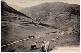 Montségur - Les Paturages (vaches) - France