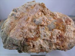 VEGETAUX FOSSILES DANS CONGLOMERAT TERTIAIRE 20 X 12 CM LE MALZIEU - Fossils