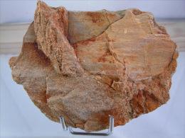VEGETAUX FOSSILES SUR ARKOSE TERTIAIRE 12 X 8 CM LE MALZIEU - Fossils