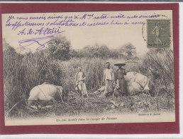 UN JOLI DOUBLE DANS LA JUNGLE DE PENONS - Cambodia