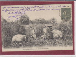 UN JOLI DOUBLE DANS LA JUNGLE DE PENONS - Cambodge