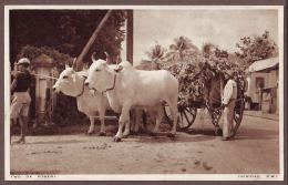TRINIDAD  Oxen Cart  Tr79 - Trinidad