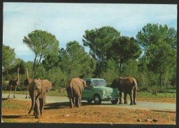 AUT & FOTO SAFARI RUHE Mallorca Elefente Con Coche Elephants With Car Sessalines Baleares - Elefantes