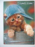 Cat    Chat    Katze / - Gatti