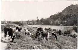 Carbonne - Les Bords De La Garonne (vaches) - Autres Communes