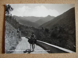 Fi1449)   Reggello Vallombrosa - Sugestiva Passeggiata - Firenze