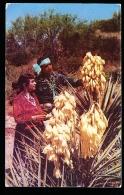 THEME INDIENS / Navajo And Yucca / - Indiens De L'Amerique Du Nord