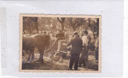 CARD PHOTO Cm. 8,5x6 MACCHINA SEMINATRICE DI GRANTURCO IBRIDO A SAVIGLIANO (CUNEO) DOPPIO SCANNER -2 0882 16341-342 - Tracteurs