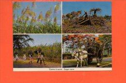 MAURITUS - Ile MAURICE: Canne à Sucre  ( Non écrite Et Non Voyagée) - Mauritius