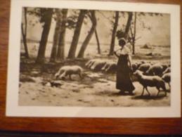 Bergère Et Son Troupeau De Moutons - Calendari