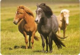 CALENDARIO DEL AÑO 2013 DE UNOS CABALLOS (HORSE-CABALLO) (CALENDRIER-CALENDAR) - Calendarios