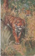 Indian Tiger  Tucks Oilette Post Card # 49323 - Tigers