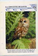 Fiche Double--La Chouette Hulotte-- Oiseau Fiche Illustrée Documentée --format  170mm X 240 Mm - Animales