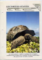 Fiche Double--Les Tortues Géantes-- Fiche Illustrée Documentée --format  170mm X 240 Mm - Animaux
