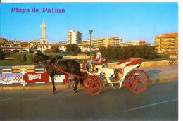 MALLORCA - EL ARENAL - Playa De Palma - Cheval - Horse - Mallorca