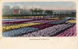 [DC8723] HYACINTHEVELD BIJ HAARLEM - CARTOLINA D'EPOCA - Old Postcard - Primi '900 - Paesi Bassi