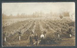 - CARTE PHOTO - Champ Cultivé (vigne?), à Identifier - Landbouw