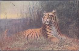 Raphael Tuck Und Sons Oilette Tiger Wild Animals - Animaux & Faune