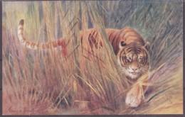 Raphael Tuck Und Sons Oilette Tiger/ Tigress  Wild Animals - Animaux & Faune