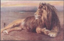 Raphael Tuck Und Sons Oilette Lion Löwe  Wild Animals - Animaux & Faune