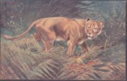 Raphael Tuck Und Sons Oilette Lioness/ Löwe  Wild Animals - Animaux & Faune