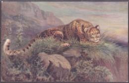 Raphael Tuck Und Sons Oilette Leopard / Leopardess  Wild Animals - Animaux & Faune