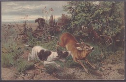 Guido Maffei Sichere Beute Tiermalerei - Animaux & Faune