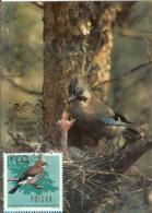 Poland 1980 Canceled In Krakow, Eurasian Jay Bird Birds Fauna - Maximum Cards