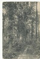 Mont De L'Enclus-Amougies - L'Horlitain - 1912 - Mont-de-l'Enclus