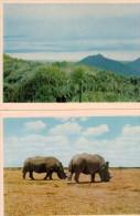 FAUNAFLOR CONGO II: 33 Photos 10,7x7,7cm - Côte D'Or