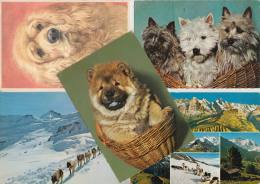 9 POSTCARDS : HOND / DOG / CHIEN / HUND - Postkaarten