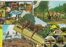 13 POSTCARDS : PFERDE / PAARDEN / CHEVAL / HORSE  (4 Scans) - Postkaarten