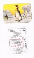 Honigs Macaroni Dieren Animaux 66 Le Pingouingéant  De Koningspinguin  Der Alk - Autres