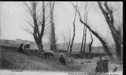 Troupeau De Moutons - Le Crotoy