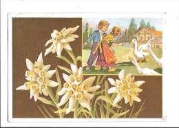 FLEURS DES ALPES. - N°4. Edelweiss. (Fleur, Costumes, Illustrateur) - France