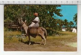 Jamaica, B. W. I. - Market Bound ! - Jamaïque