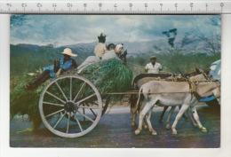 Jamaica, B. W. I. - Homeward Bound ! - Jamaïque