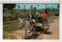 Jamaica, W. I. - Cocoanut Wagon - Jamaïque