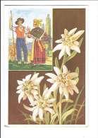 FLEURS DES ALPES. - N°1. Edelweiss. (Fleur, Costumes, Illustrateur) - France