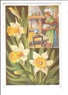 FLEURS DES ALPES. - N°6. Jonquilles. (Fleur, Costumes, Illustrateur) - France