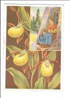 FLEURS DES ALPES. - N°3. Sabots De La Vierge. (Fleur, Costumes, Illustrateur) - France