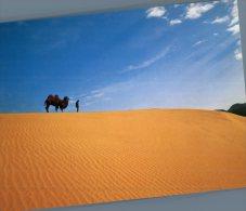 (020) Japan - Tottori Sand Dune And Camel - Japon