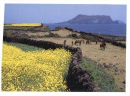 (020) Korea - Cheju Island Poney Horse - Corea Del Sud