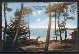ILE AUX MOINES . CPA  Un Joli Coin Du Bois D'amour . Voir Recto Verso   (R993) - Ile Aux Moines