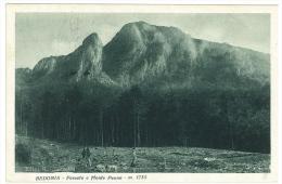 CARTOLINA - BEDONIA - FORESTA E MONTE PENNA  - VIAGGIATA NEL 1930 - Parma