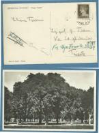 FRIULI VENEZIA GIULIA  -   GRADISCA  D´ISONZO  - PARCO CENTRO  -   VIAGGIATA  1934 - Gorizia
