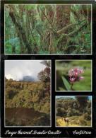 CPSM Costa Rica-Parque Nacional Braulio Carrillo   L1344 - Costa Rica
