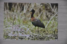 M1-22 ++ GUYANA 2012 BIRDS OISEAU VOGELS  MNH ** POSTFRIS NEUF - Guyana (1966-...)