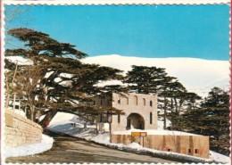 Liban Lebanon  Les Cèdres  - The Cedars - CPSM GF Ed ACE - Liban